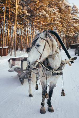 horse sleigh: Frozen horse with open sleigh