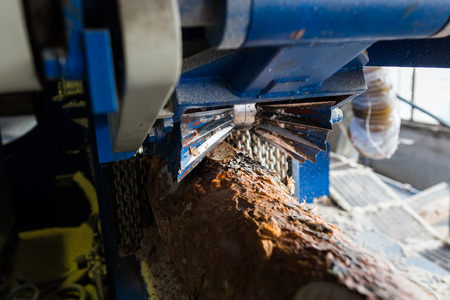 lumbering: Automatic sorting logs diameter at the sawmill