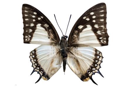 papillon: Papillon Banque d'images