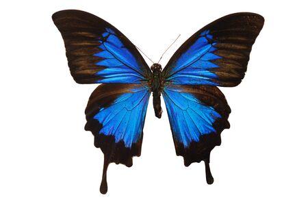 mariposa: Mariposa Foto de archivo