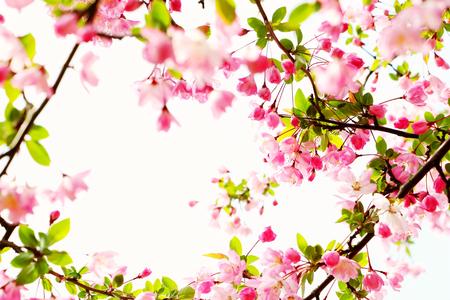 peach blossom Reklamní fotografie