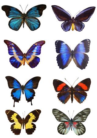 popular science: Nature butterflies