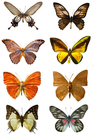 popular science: Collection of butterflies