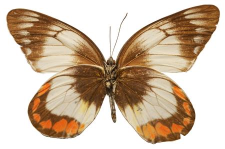 popular science: Butterfly specimens