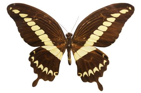 critter: Butterfly specimens