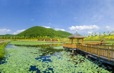 Landscape scenery view of a lotus pond on Six Ding mountain, Dunhua