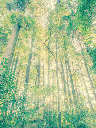 Green forest and morning sunlight - background photo