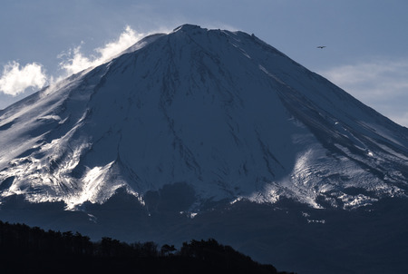 Bird flying with snow peak mountain Fuji  photo