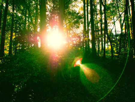 Sun light shining through the green wood Stock Photo - 25928030