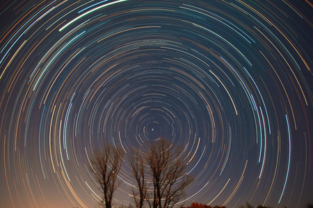 polaris: Polaris and star trails over the trees