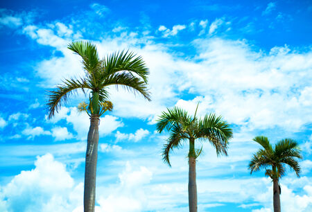 Palm trees and sky 免版税图像
