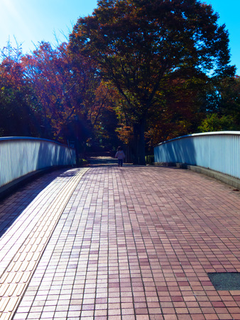 iridescent: Footbridge and light iridescent