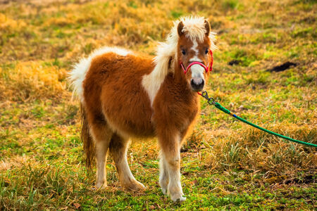 little colours: Pony stand in grass field