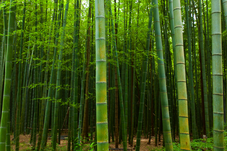 Bamboo forest  免版税图像