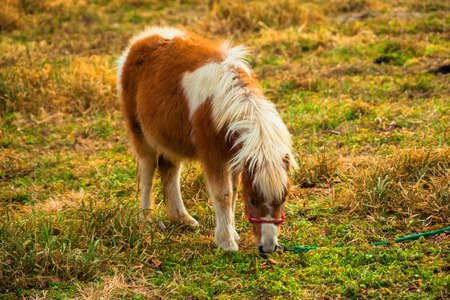 Pony in the grass field photo