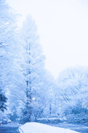Snow, snow scene, covered with snow in Japan Stock Photo
