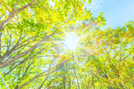 brighter: Blue sky and sunshine in Summer Stock Photo