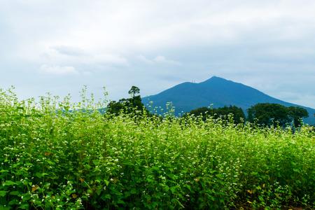 Buckwheat field and Mount Tsukuba photo