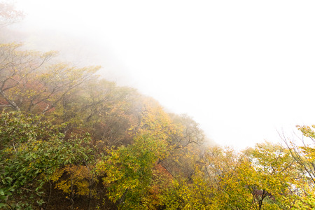 Autumn leaves in the fog photo