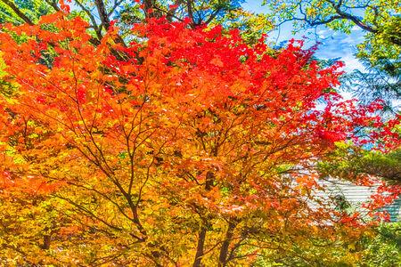 Autumn leaves in Nikko photo