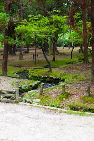 Deer at the Nara Park 免版税图像