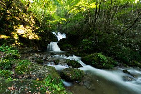 Mountain stream of Shimotaki
