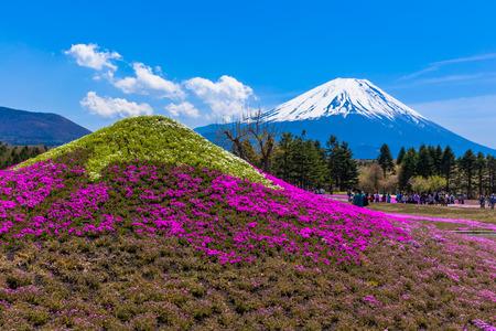 Monument of moss phlox Fuji and Mount Fuji 免版税图像