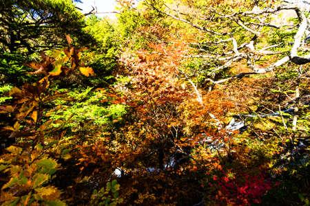 Autumn leaves in Nikko 免版税图像