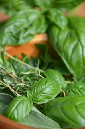 culinary herbs photo
