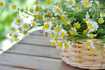 chamomile flowers in basket
