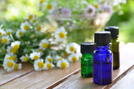 chamomile flower: essential oils for aromatherapy