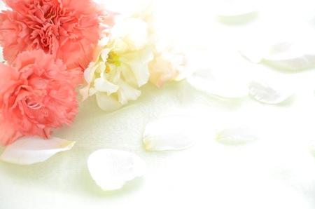 Nelken Blumen Standard-Bild - 27739732
