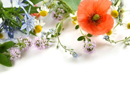 ハーブの花 写真素材