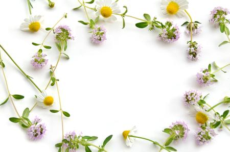 白い背景の上にハーブの花 写真素材