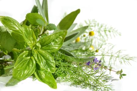 erbe aromatiche: erbe