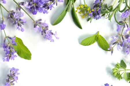 Lavendel und Kräuter Standard-Bild - 29655586