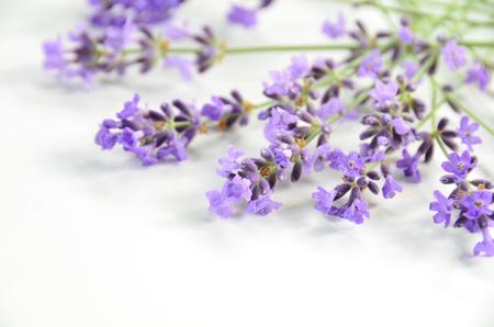 Lavendel Standard-Bild - 30007326