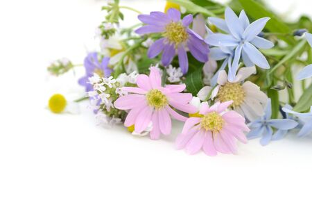 cut flowers: pastel flowers Stock Photo