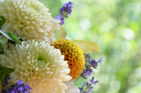 菊の花とラベンダー 写真素材