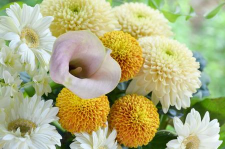 chrysanthemum flower and gerbera bouquet Stok Fotoğraf