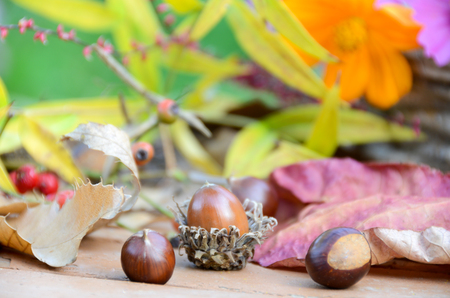 autumn arrangement: autumn arrangement with acorn and chestnuts