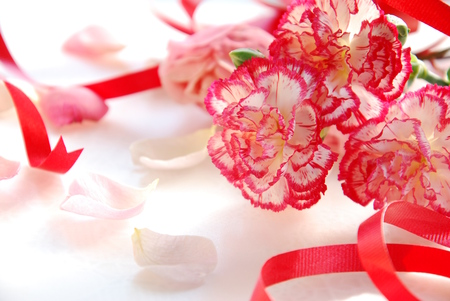 carnation flowers with red ribbon with rose petals