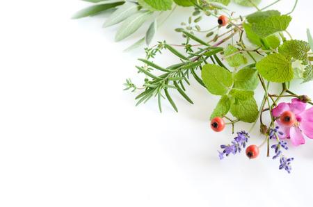 rosemary flower: frame of herbs