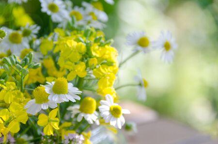 flower arrangement: chamomile and mustard flowers