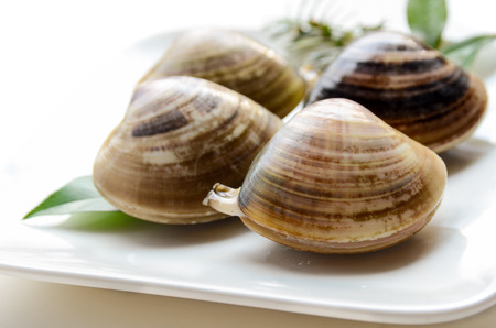 plate: fresh raw clams on plate Stock Photo