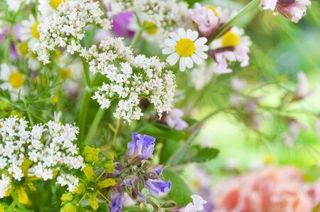 rose garden: herbal flowers in garden Stock Photo