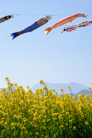 mustard field: carp streamer and mustard flower field Stock Photo