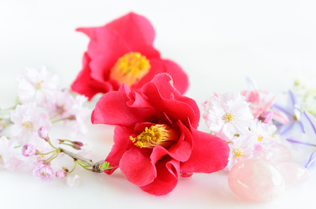 椿と春の花 写真素材