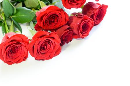 Rote Rosen im weißen Hintergrund Standard-Bild - 58522637