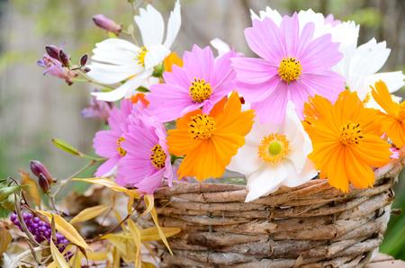 バスケットでコスモスの花